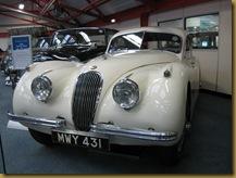 IMG_0040 Jaguar