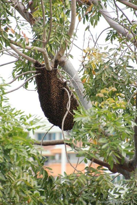 Bee Hive2