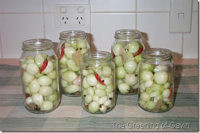 Pickled Onions 008