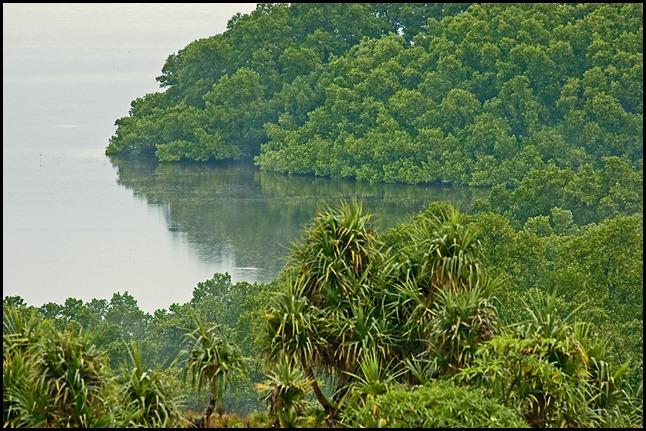 pl-mangroves_v2
