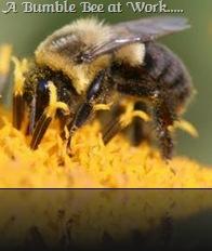 Bumble Bee...