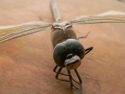 deathtoadragonfly