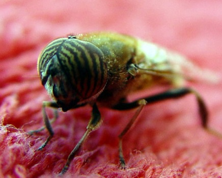 insecteyetoeye