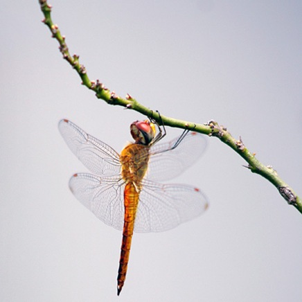 thehangingdragonfly