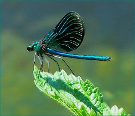 dragonflybyindjaart