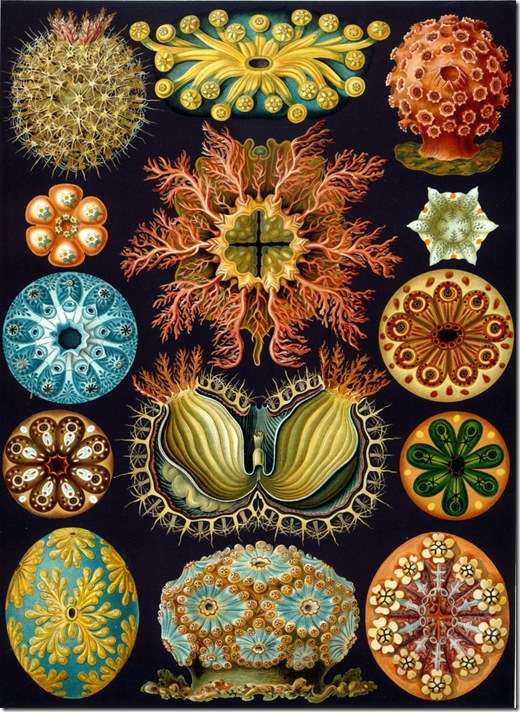 Haeckel_Ascidiae (FILEminimizer)