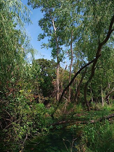 succession tree pics