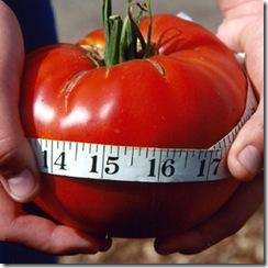 tomategigante