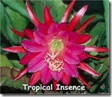 Epi tropical incense