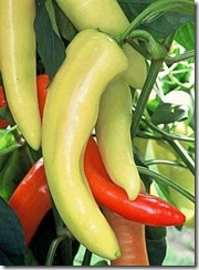 Pepper Hungarian Yellow Wax