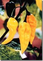 Pepper Fatalli