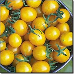 Tomate Blondkopfchen