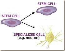 stem-cell-specialization