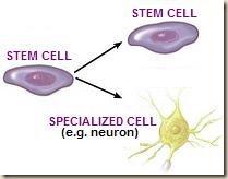 stem-cell-specialization