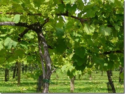 Suffolk Online - Suffolk Wine
