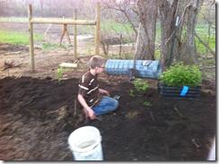 blueberryplanting1