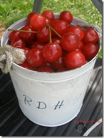 Sour cherry tree can