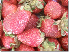 Strawberries, Flowers, Orange Puff 015