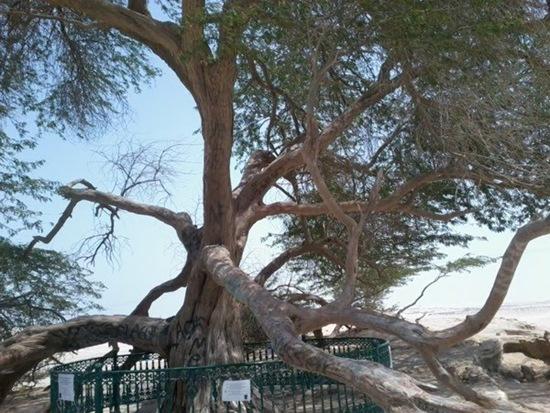 Árvore da vida3