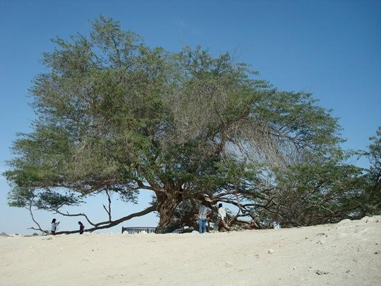 Árvore da vida2