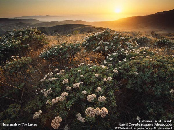 National Geographic Magazine - February 2006 - California's Wild Crusade - Photograph by Tim Laman