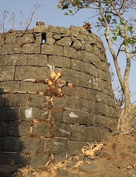 Nature's Brickwork Destroyed at Tikona Fort — A Fig Tree on a Bastion is Cut Now
