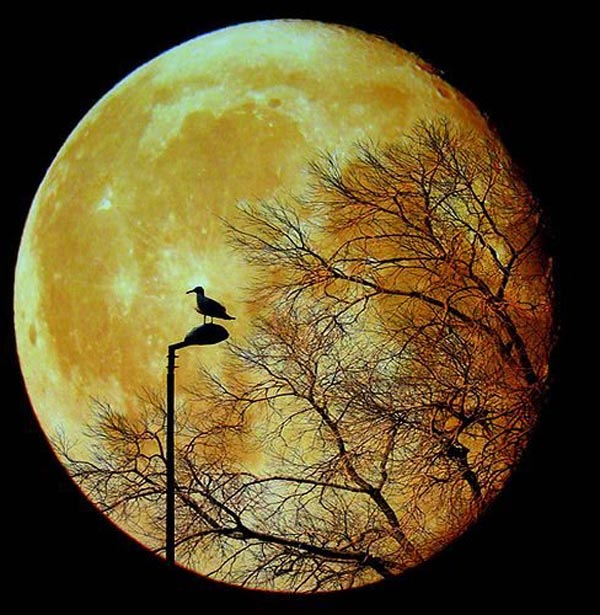 Moon based silhouette of duck sitting on light pole with tree