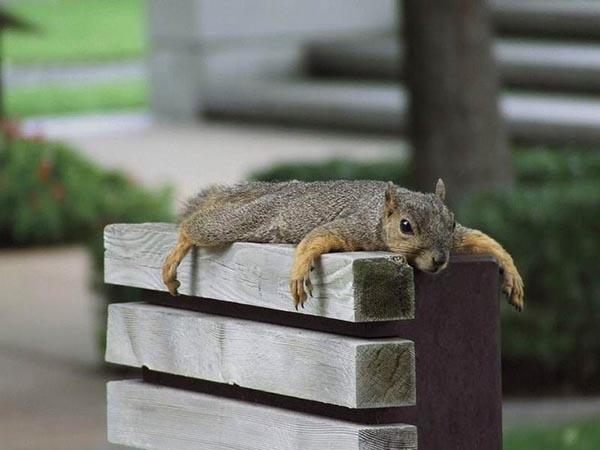 Squirrel lying on block