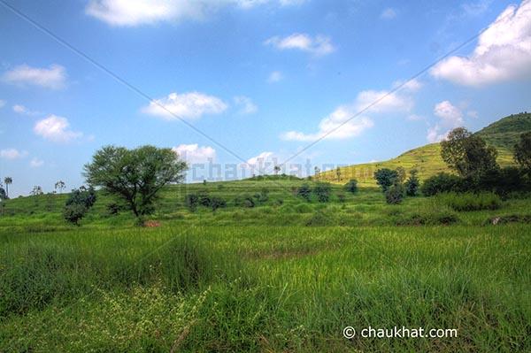 Forever green landscape
