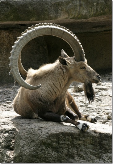 Ubuntu-8-10-a-k-a-Intrepid-Ibex-2