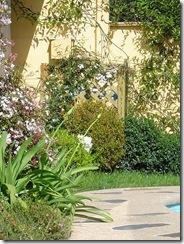 plagas-jardin