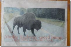 12 buffalo