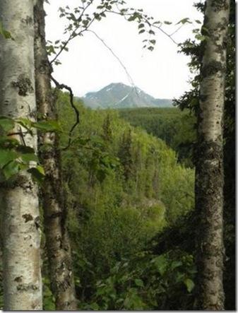 20100609-71 Chugach Mountain from Tbird trail