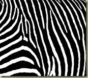 zebra-stripe-canvas-print-552-p