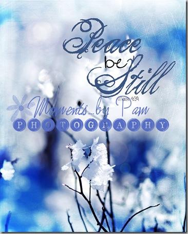 Snowy Day 2 023 02 copy