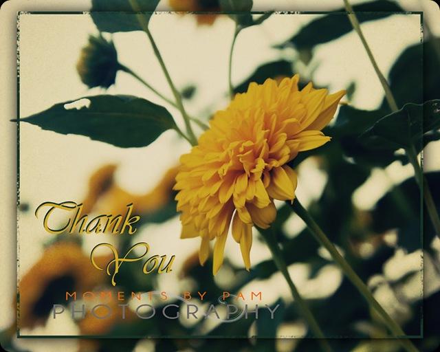Yellow Zinnea framed Thank You 111 copy
