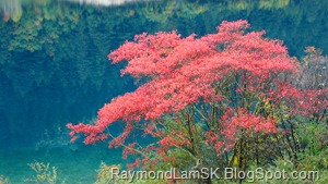 九寨沟-粉红树 JiuZhaiGou Valley-pink tree