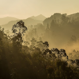 Forest in the Mist by Georgia Darlow - Landscapes Forests ( hills, dawn, trees, india, kerala, forest, landscape, munnar, mist )