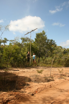Telegraph Pole, Old Telegraph Track, Cape York