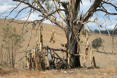 Dog Tree Omeo Victoria Australia