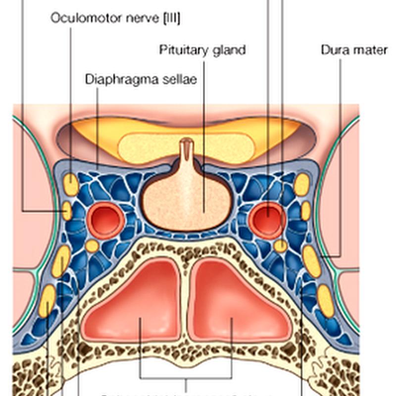 02. Pituitary and Hypothalamus I