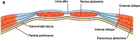 below semicircular line of Douglas
