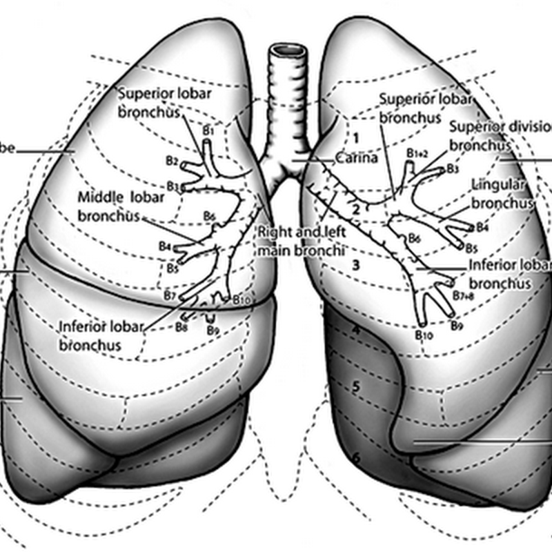 Approach to the Respiratory Patient : Basic Anatomy Review