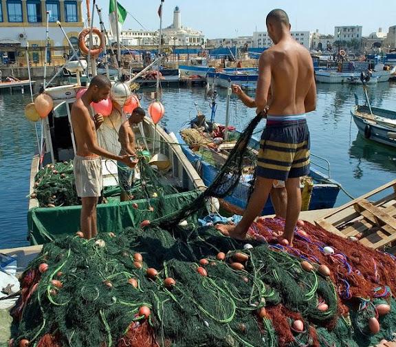 La sardine détournée par la mafia dans actualité