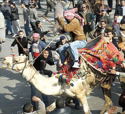 """Importantes manifestations en Egypte. """"Moubarak dégage"""", scandent les manifestants Ph_3_Chameau_543060550"""