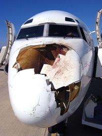 Bird-v-Plane