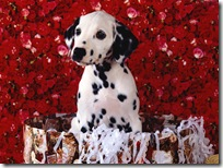 Dogs-wallpapers (160)