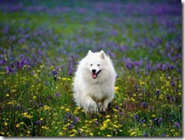 Dogs-wallpapers (159)