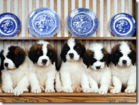 Dogs-wallpapers (158)