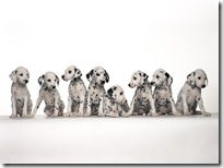 Dogs-wallpapers (155)